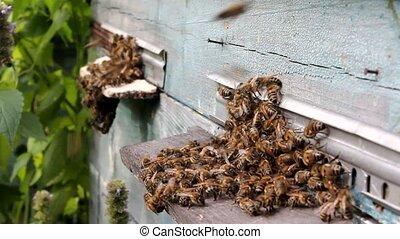 Ajar notches, quiet flight of bees - it happens in fall.