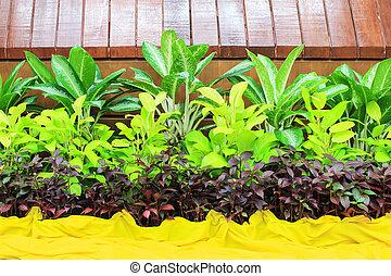ajardinar, indoor, jardim