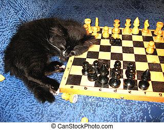 ajedrez, duerme, gato
