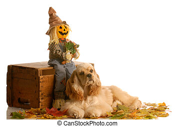 ajuste, perro, otoño