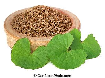 ajwain, hojas, thankuni, semillas