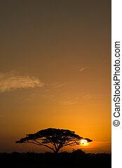 akát kopyto, v, východ slunce