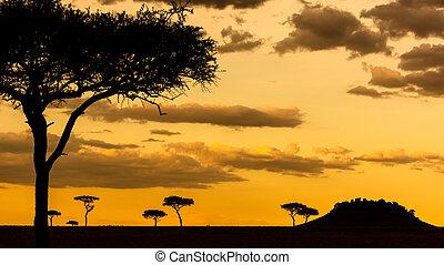 akacja, afrykanin, tło, zachód słońca, scena, drzewo