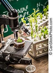 akademiker, laboratorium, med, mikroskop, och, planterar