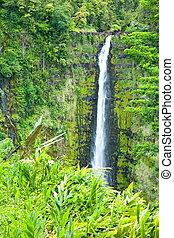 Akaka Falls on the Big Island of Hawaii in a tropical rain forest