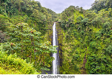 Akaka Falls waterfall in Hawaii