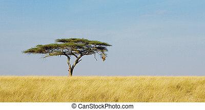 serengeti geparde tansania baum akazie tansania. Black Bedroom Furniture Sets. Home Design Ideas