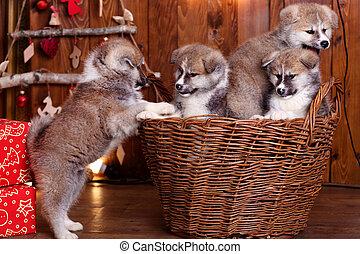 akita-inu, 子犬, うそ, 上に, 木, 背景