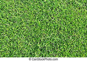 akker, groen gras, achtergrond