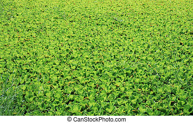 akker, groene achtergrond