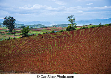 akker, koren, landscape