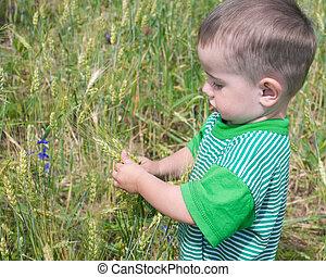 akker, nadenkend, toddler, tarwe