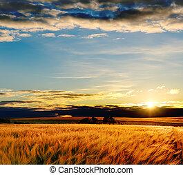 akker, ondergaande zon , gerst, goud