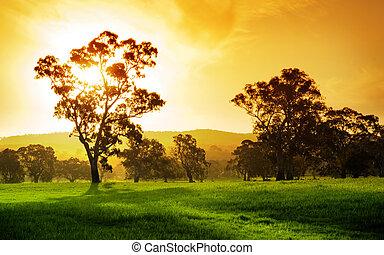 akker, ondergaande zon