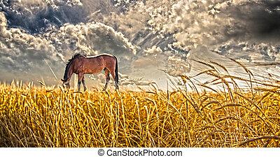 akker, paard te grazen