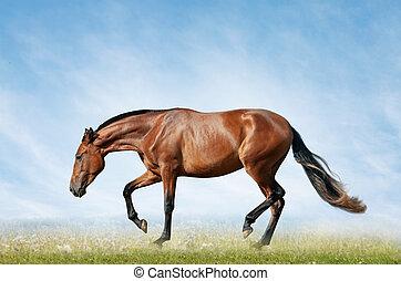 akker, paarde, baai