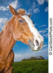 akker, paarde