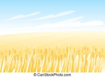 akker, tarwe, landscape
