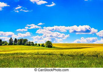 akker, van, gele bloemen, met, en, groene weide