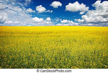 akker, van, raapzaad, met, mooi, wolk, -, plant, voor, groene, energie