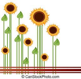 akker, zonnebloemen