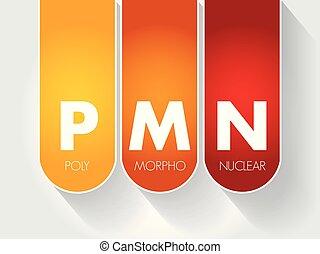 akronym, morpho, pmn, nukleär, -, poly