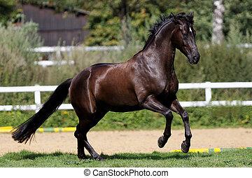 aktiv, pferd