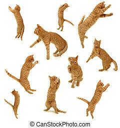 aktiv, sammlung, babykatzen