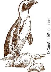 akwaforta, rysunek, ilustracja, od, humboldt, pingwin