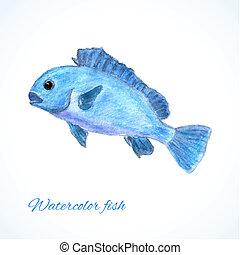 akwarela, fish
