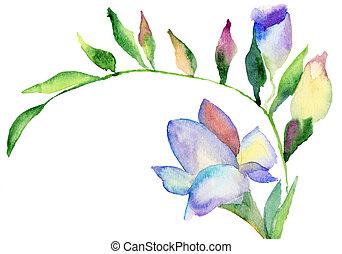 akwarela, frezja, kwiaty, ilustracja