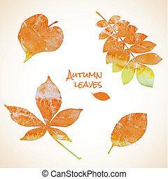 akwarela, liście, komplet, barwny