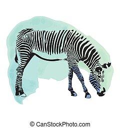 akwarela, osłona, zebra, barwny