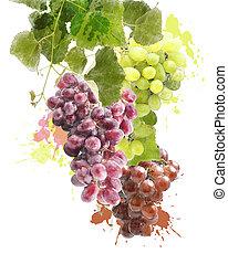 akwarela, wizerunek, winogrona