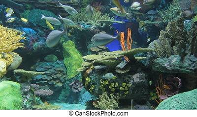 akwarium, egzotyczny, fish