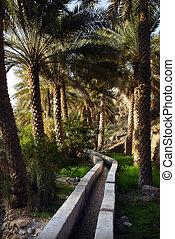 Al Abreyeen, Misfah, Oman in the Middle East.
