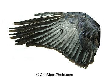 ala de pájaro