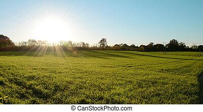 alacsony, bukás, nap, shines, felett, egy, zöld kaszáló