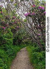 alagút, közül, rododendron, bokrok