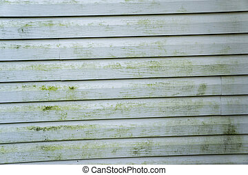 Alage & Mold On A House With Vinyl Siding - Alage and mold...