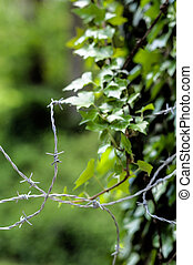 alambre de púa, nature., contrarios