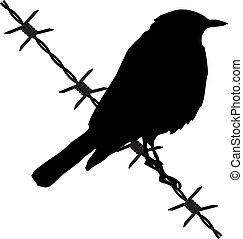 alambre de púa, pájaro