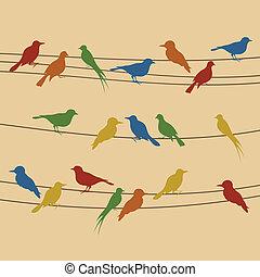 alambre, pájaro
