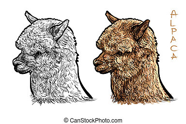 alpaca illustrations and clip art 1 407 alpaca royalty free rh canstockphoto com alpaca cartoon clipart alpaca clipart free