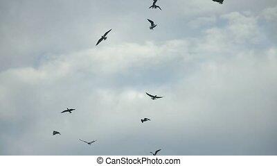alarmado, céu, pássaros