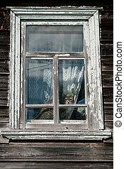 Alarmed cat sitting on a windowsill and looking out the window in an old country house.