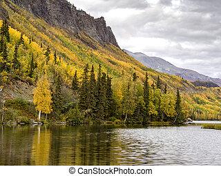 Alaska Aspen in Autumn