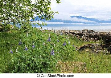 Alaska Beach Landscape