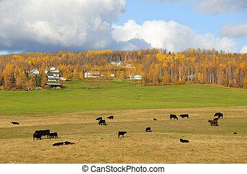 Alaska Cattle Ranch in Fall