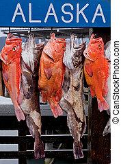 Alaska fishing - Results of fishing in Seward, Alaska, USA...